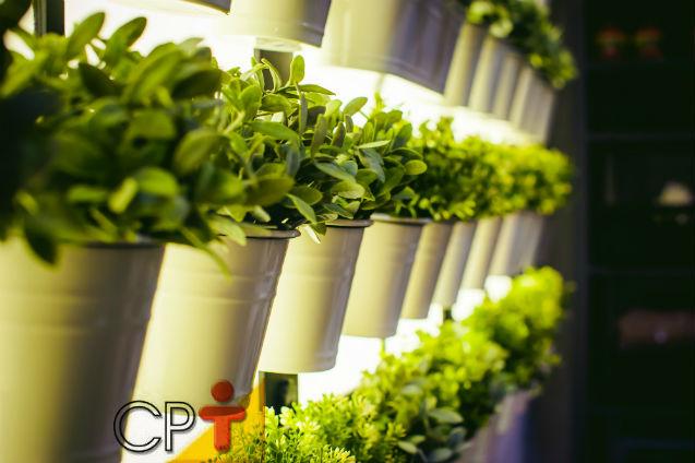 Parede verde comestível: com quais plantas montar   Artigos Cursos CPT