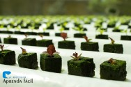 Canteiros e sementeiras para a produção de mudas