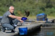 Alimentação de peixes criados em cativeiro