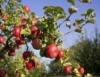 Análise do mercado da fruticultura mostra as vantagens da produção
