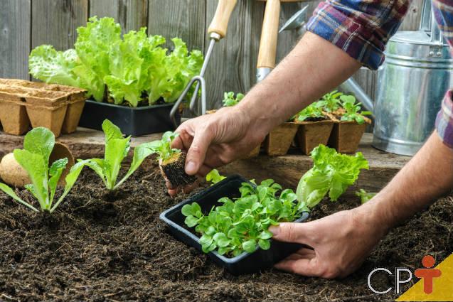Saiba mais sobre plantio de hortaliças