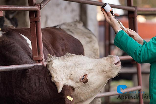 Animal recebendo vacina