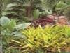 Folhagens também decoram jardins