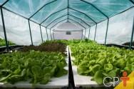 O que cultivar no sistema hidropônico?