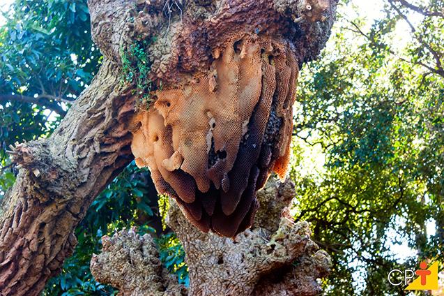 Colmeia em árvore