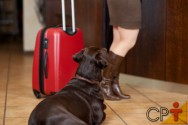 Hotel para cães e gatos: check-in e check-out