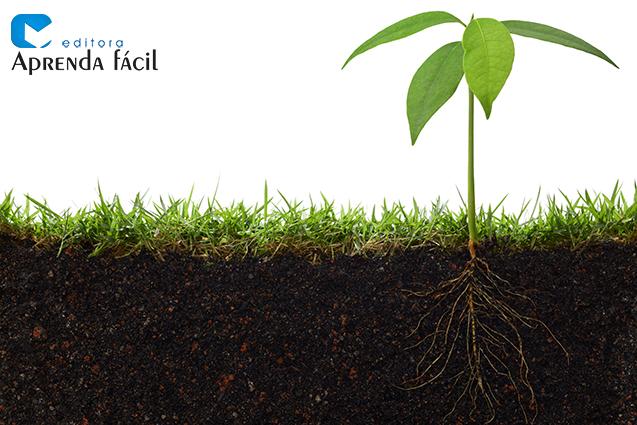 Planta e raíz
