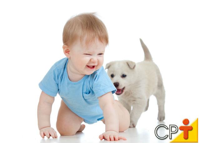 Por que a fase de socialização é importante para os cães?   Artigos Cursos CPT