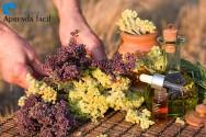 8 dicas para o cultivo de ervas aromáticas