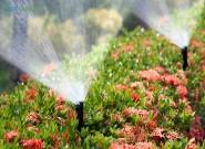 As 4 principais técnicas de irrigação