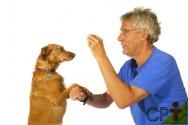Adestramento de cães: esquema de reforçamento