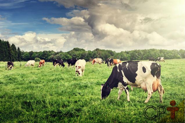 Importância da pastagem no sistema orgânico de leite   Artigos Cursos CPT