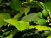 Seminário aborda formas de combater pragas, doenças e plantas daninhas do feijoeiro