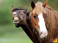 Cavalos que mordem