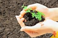 Uso de fósforo na agricultura deve ser reavaliado