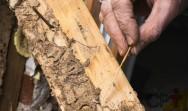 Cupins subterrâneos: métodos de controle