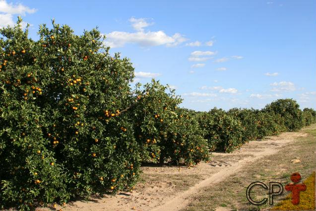 É ou não é viável investir em lavouras orgânicas?   Artigos Cursos CPT