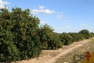É ou não é viável investir em lavouras orgânicas?