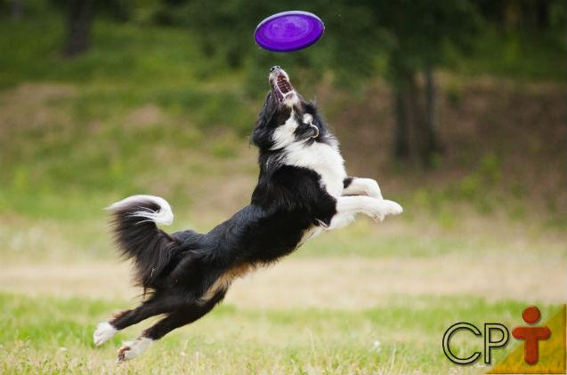 Adestrar cães com brinquedos? Isso é possível?   Artigos Cursos CPT
