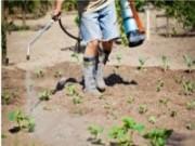 Roundup: um defensivo poderoso para eliminar pragas e doenças