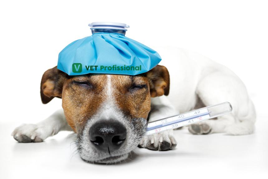 Ajudando na recuperação pós-operatória do seu cão   VetProfissional
