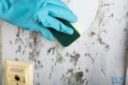 Como evitar o mofo?