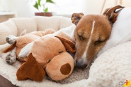 Cuidando melhor do seu cão