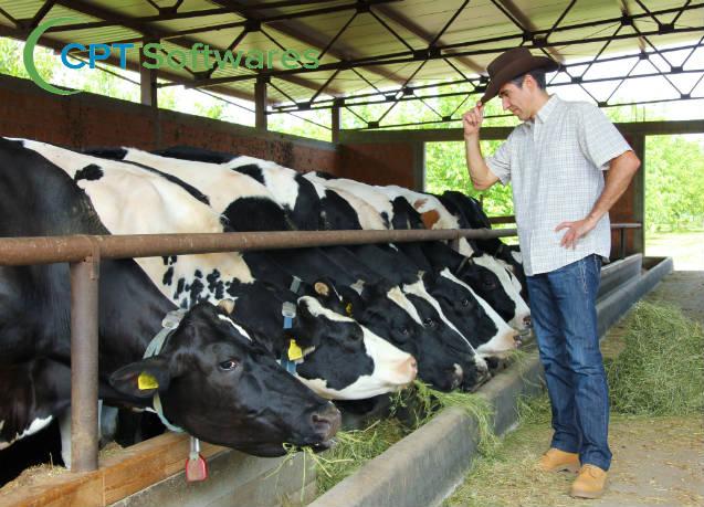 Uso racional de antibióticos no tratamento de mastite em vacas