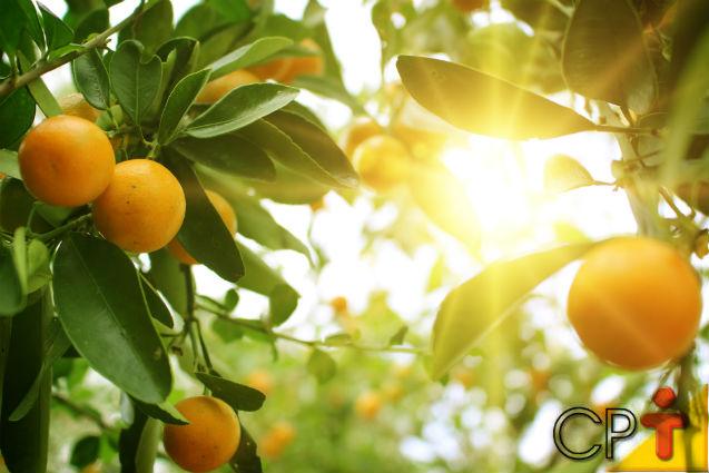 Calda sulfocálcica viabiliza a produção de citros orgânicos   Notícias Cursos CPT