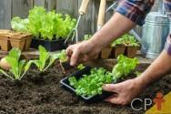 Saiba mais sobre certificação de hortaliças orgânicas