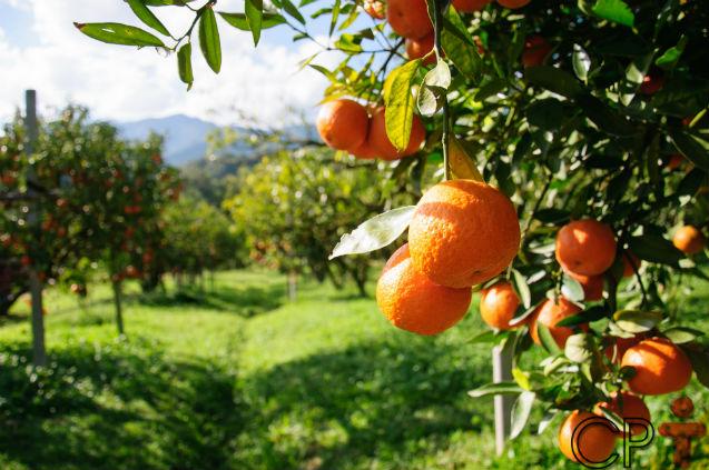 De propriedade rural convencional para orgânica: fácil ou difícil?   Dicas Cursos CPT