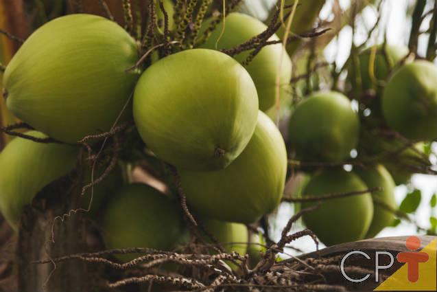 Normas determinam padrões para água de coco