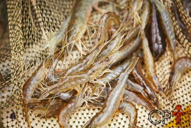 Camarões de água doce: recria, reprodução e desenvolvimento   Artigos Cursos CPT