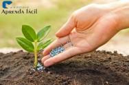 Conheça os princípios básicos da agricultura orgânica