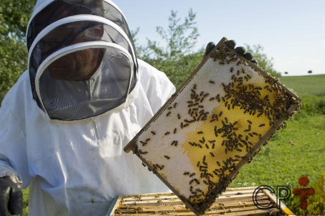Doenças e parasitas em abelhas? Como assim?   Artigos Cursos CPT