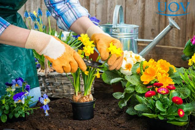 Tutorial rápido para cuidar de flores em casa