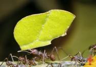 Dicas para as formigas não atacarem o plantio