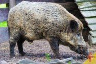 Caça para controle populacional de espécies nocivas é proibida em SP