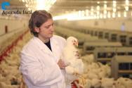 Manejo inicial de frangos de corte