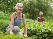 Aplicação correta dos fertilizantes em hortaliças