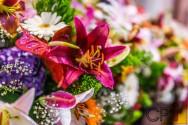 Flores comerciais: época de florescimento
