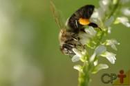 De onde vem a própolis e como ela é utilizada pelas abelhas?