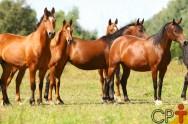 Como escolher e preparar a égua para receber embrião?
