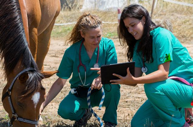 Reprodução de cavalos: transferência de embrião   Artigos Cursos CPT