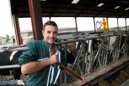 Alimentação de bovinos: consumo diário de matéria seca