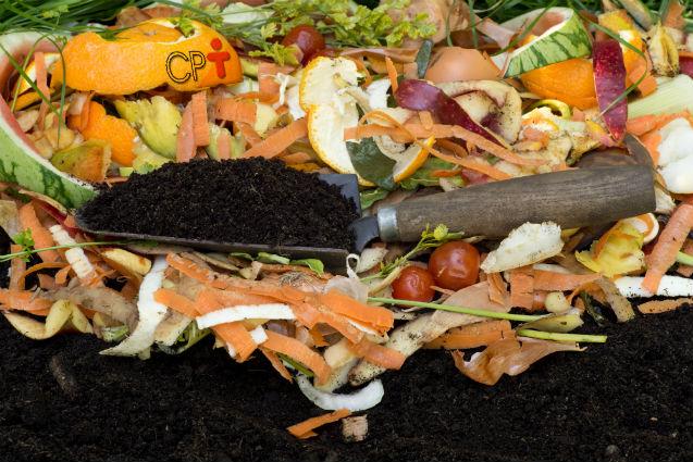 A compostagem orgânica e suas fases   Artigos Cursos CPT