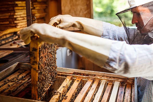 Sobre as abelhas rainhas   Cursos CPT da área Apicultura