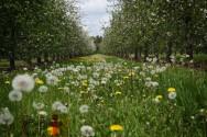 Agricultura orgânica sustentável: utilização de insumos