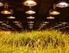 Cultivo protegido é aposta japonesa para agricultura sustentável na próxima década