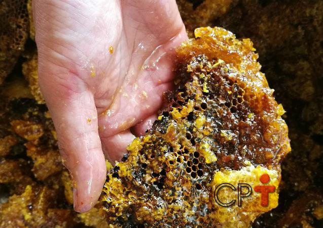 Como e quando coletar a própolis nas colmeias?   Artigos Cursos CPT